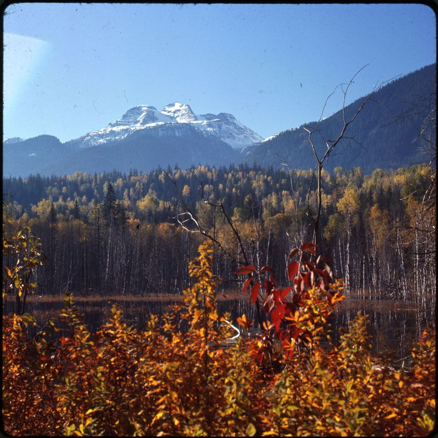 Mt. Begbie and Autumn Trees